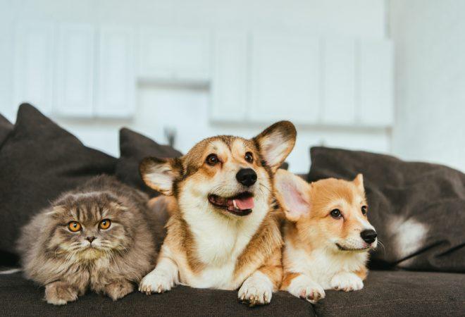 Pet em Condomínio